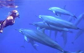 Bashar Cetacean Transformation Workshop